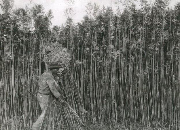 Hamppu 1940-luvulla, hampun historia