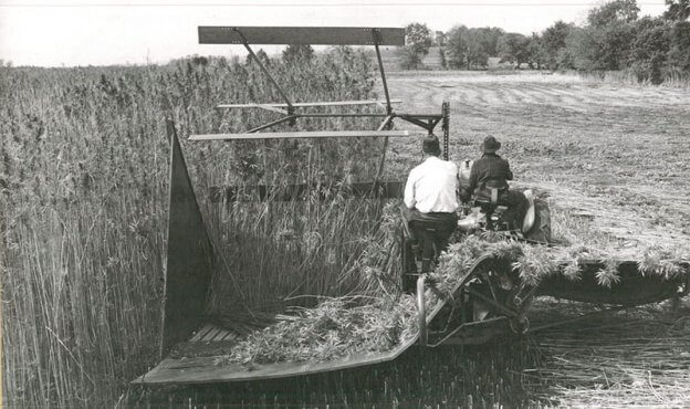 Hemp in the 1940s, the history of hemp