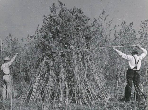Cáñamo en la década de 1940, la historia del cáñamo