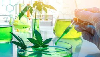 predict THC levels compared to CBD, hemp genetic test