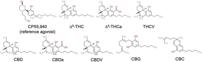 therapeutic potential, Pharmacological activity, Poly-pharmacology, minor cannabinoids