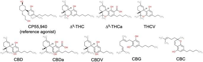 potentiel thérapeutique,Activité pharmacologique,Poly-pharmacologie,cannabinoïdes mineurs