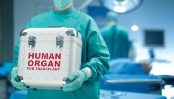 Cannabis organ transplantation