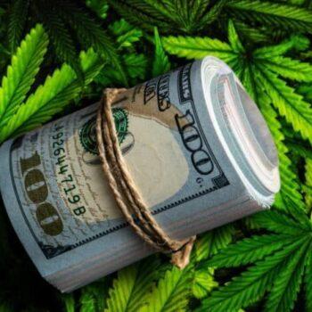 emploi cannabis us