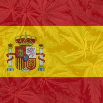 Іспанія конопель