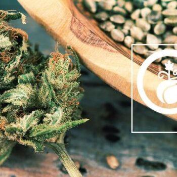 Zamnesia Seedfinder
