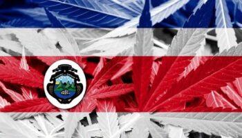 コスタリカの大麻