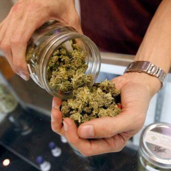 malte cannabis license
