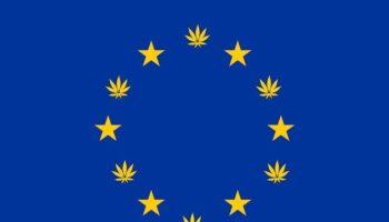cannabis gehad